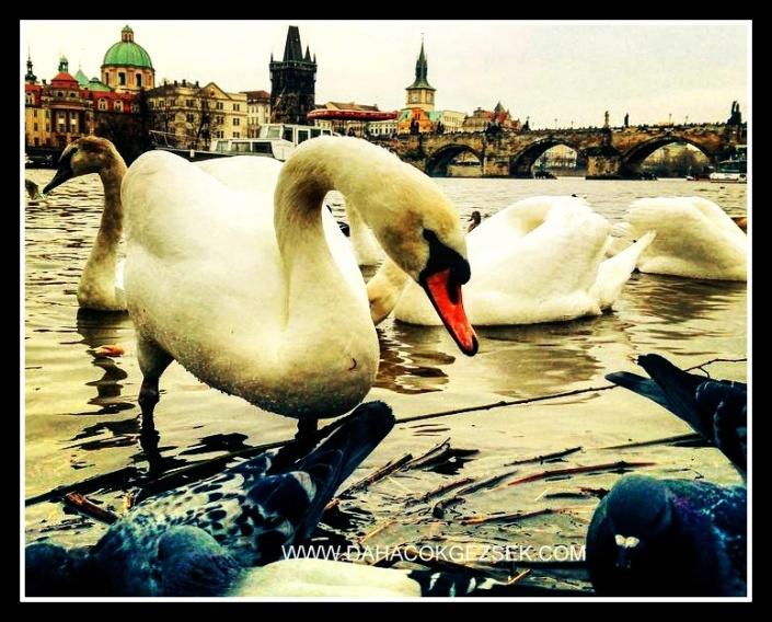 PRAG KUĞULARI